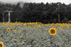 喜びの黄色