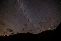 すすきと見上げる星空