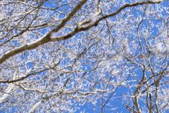 山散歩12  雪化粧と青い空。