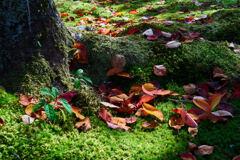 落葉と芽吹き
