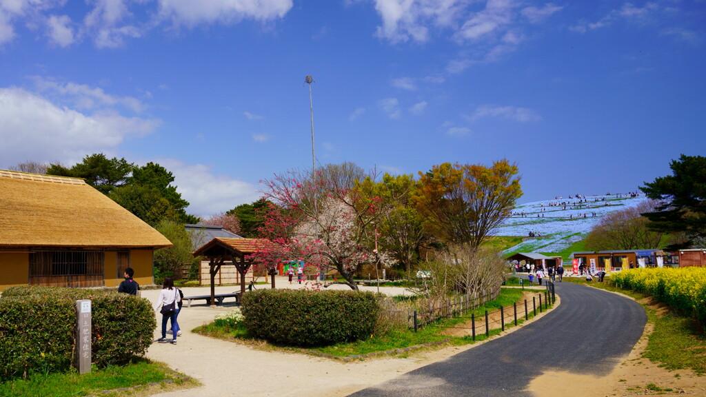 春の海浜公園