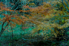 Autumn leaves(Japan)