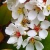 花粉もくっつけて