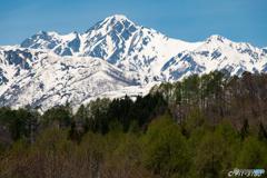 残雪の五竜岳