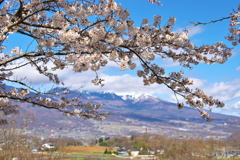 2020_04_19明神池にて (10)