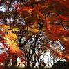 木漏れ日の紅葉を撮る人を撮る2017