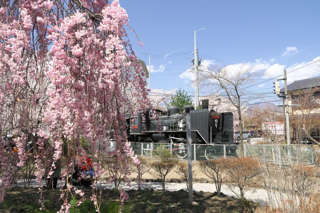 2019春の懐古園にて (1)