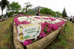 秩父 羊山公園にて 2019  (4)
