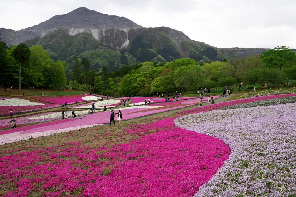 秩父 羊山公園にて 2019  (9)