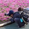 2019富士芝桜まつりにて 撮る人を撮る (1)