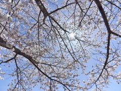 2020_04_19明神池にて (5)