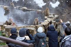 地獄谷野猿公苑にて (16)猿を撮る人を撮る