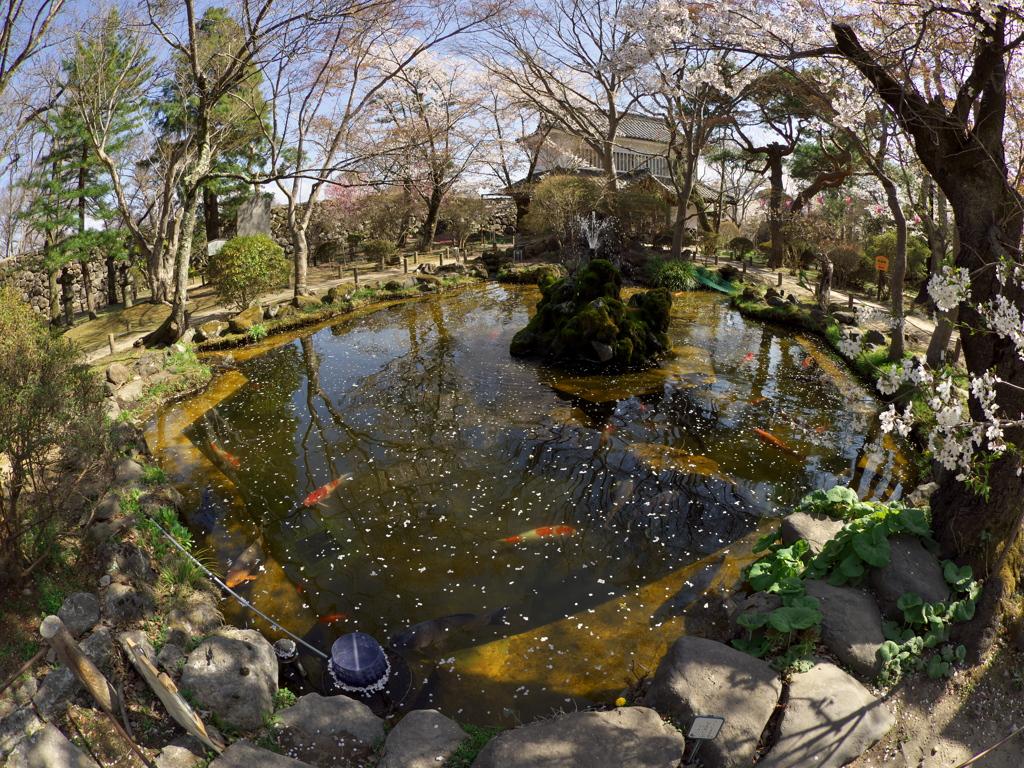 2019春の懐古園にて (8)