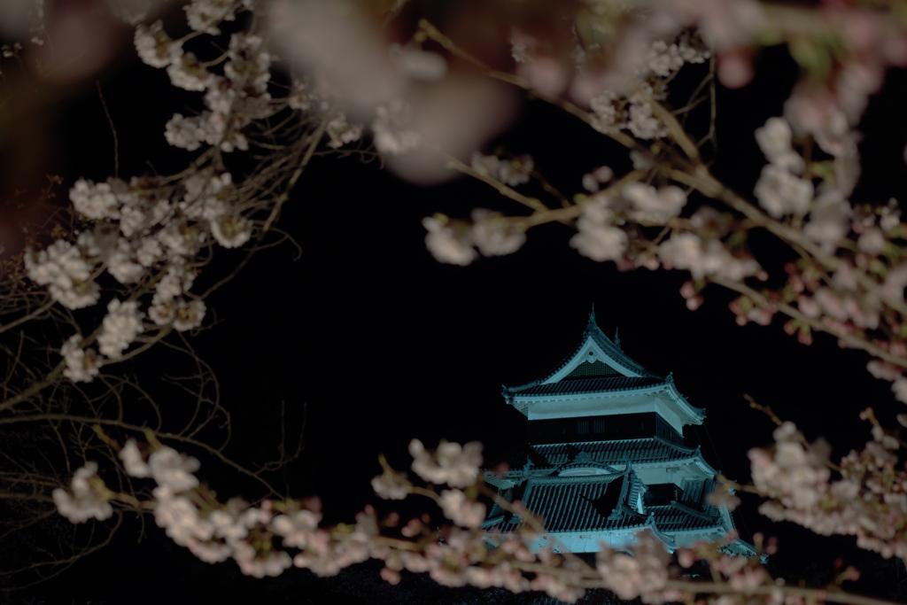 松本城2019春  (10)