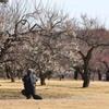 武蔵丘陵森林公園の梅の花を撮る人を撮る