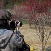 梅の花を撮る人を撮る