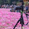 2019富士芝桜まつりにて 撮る人を撮る (3)