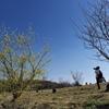 秋間梅林の蝋梅を撮る人を撮る