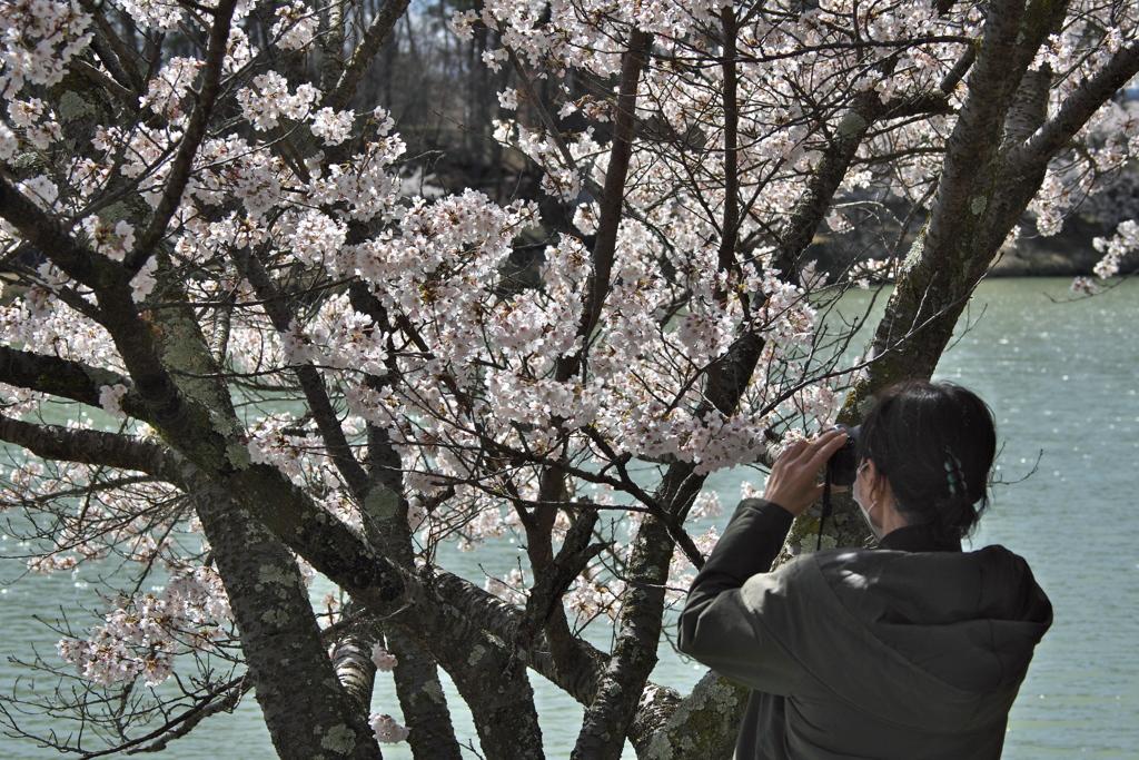 2020_04_19明神池にて (6)撮る人を撮る