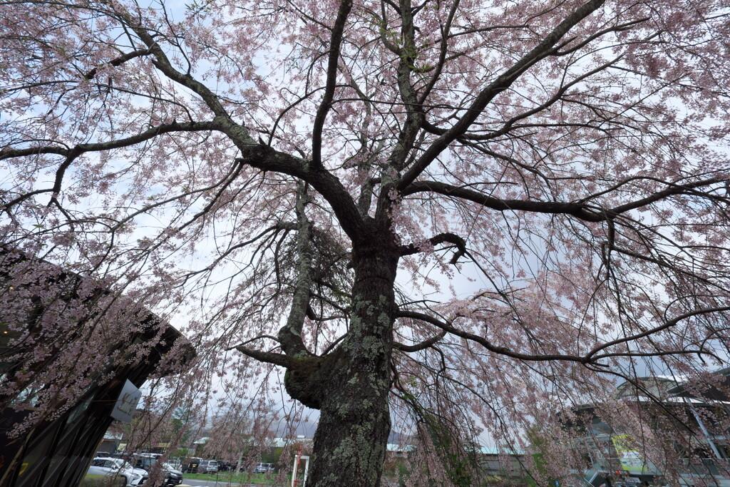 2019春の軽井沢アウトレットにて (8)