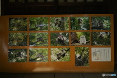 フクロウ神社のフクロウたち