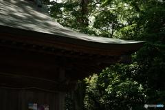 フクロウ神社に木漏れ日射す