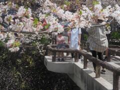 櫻橋から春風吹いた