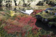 溶け込む秋