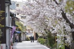 桜咲く道で