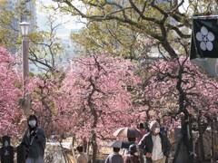 天神様に春が来た(3)