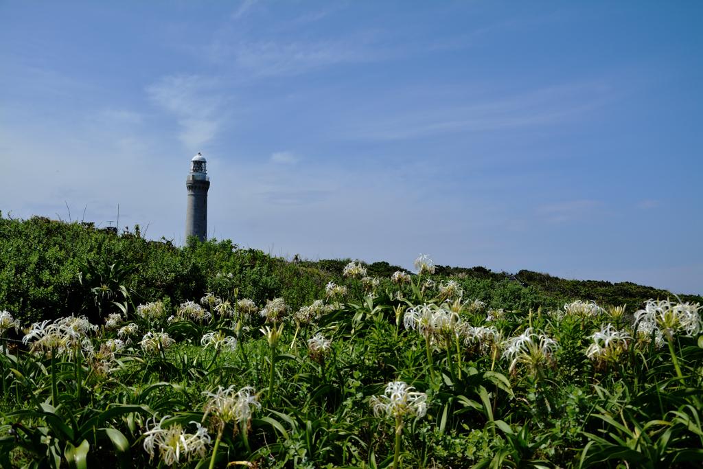 空と灯台と浜木綿と