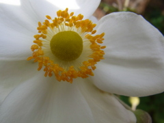 花の中の太陽