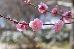春咲小紅(2)