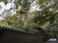 城下町の春