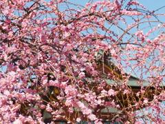 天神様に春が来た(2)