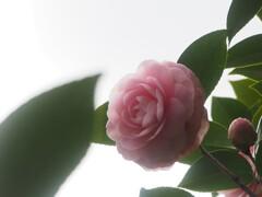 やさしい春