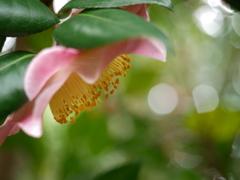 春陽のなかで(2)