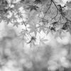 御土居の秋 #2