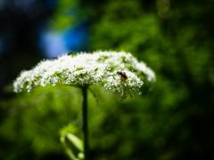 日盛りの花