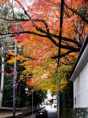 東福寺近くの紅葉