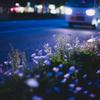 路傍に咲く #11