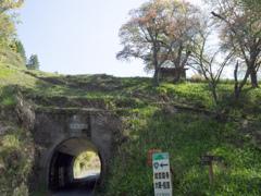 シャガの咲くトンネル