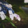 路傍に咲く #12