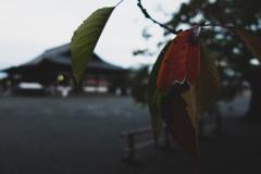 ある秋の朝
