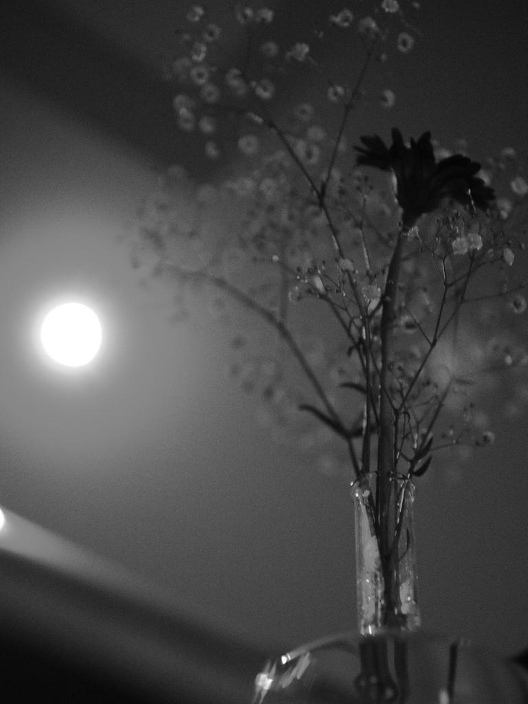 月とカスミソウ