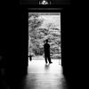 京都市美 #3