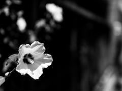 路傍に咲く #14