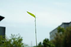 草のアンテナ