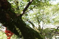平野神社にて