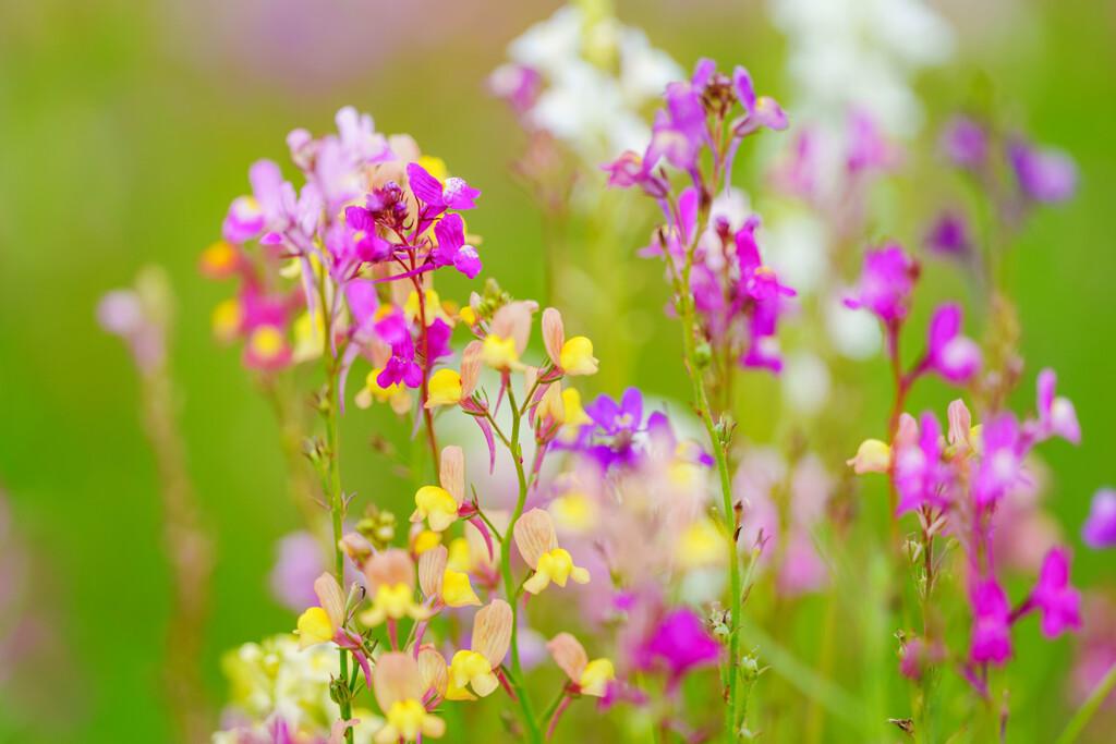 お花畑にて